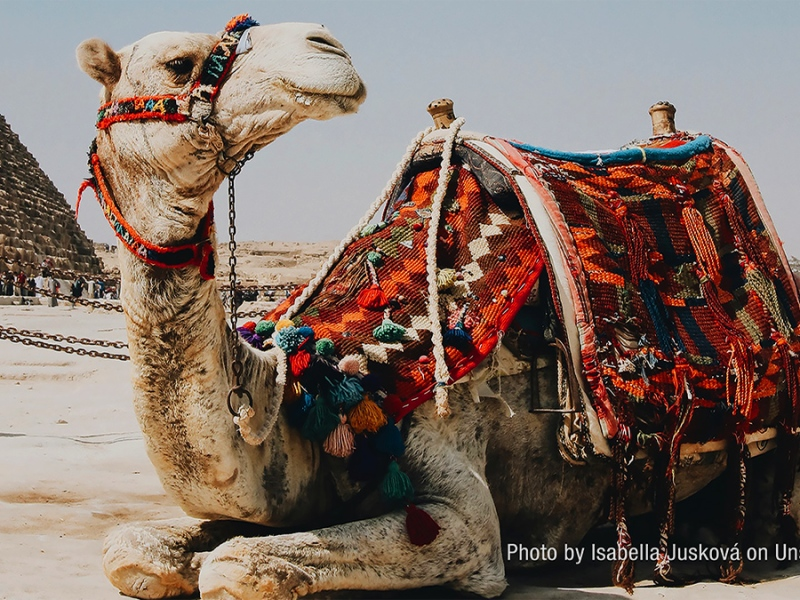 image of a camel with a colourful saddle, lying in the sand